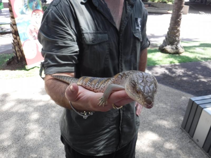 In Darwin