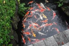 POI_pond